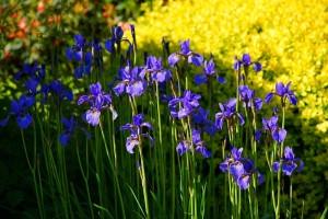 Découvrons les fleurs de mai