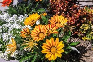 Quelles sont les fleurs de septembre ?