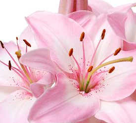 bouquet with pink lilies