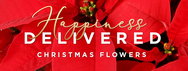 Happiness Delivered Christmas Flowers