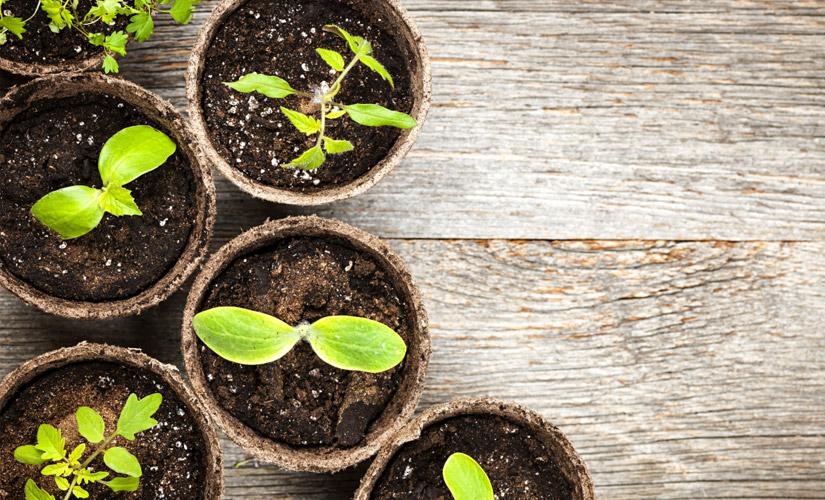etes-vous-Meilleur-Cuisinier-Que-Jardinier-Cultivez-vos-Propres-Herbes
