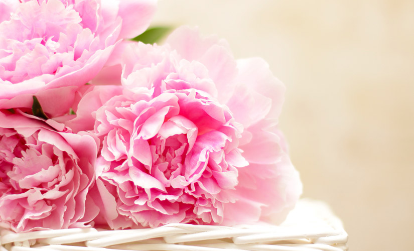 10 fleurs que vous ne devriez jamais offrir quiconque closion. Black Bedroom Furniture Sets. Home Design Ideas