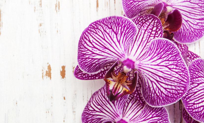 10 conseils pour orchid es heureux et floraison closion - Entretien orchidee apres floraison ...