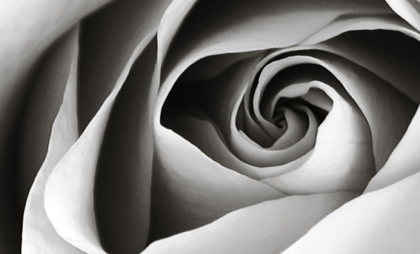 sympathy-flowers-hipper-france