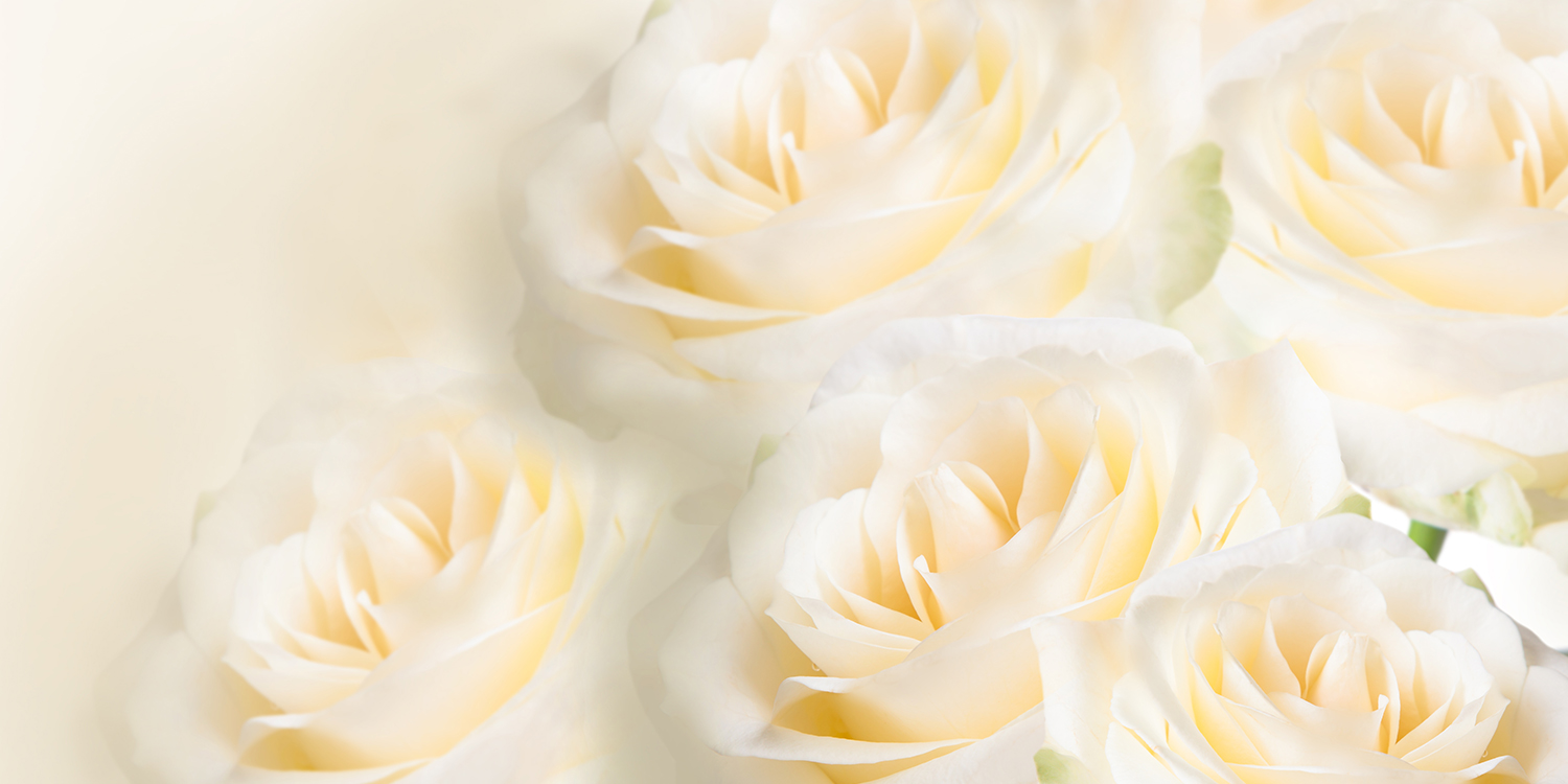 signification 10 roses blanches