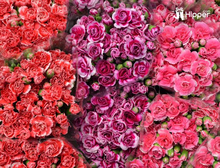 Significations Des Couleurs Des Fleurs Eclosion