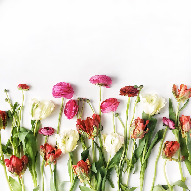 Les pr noms fleurs closion - Camelia prenom ...