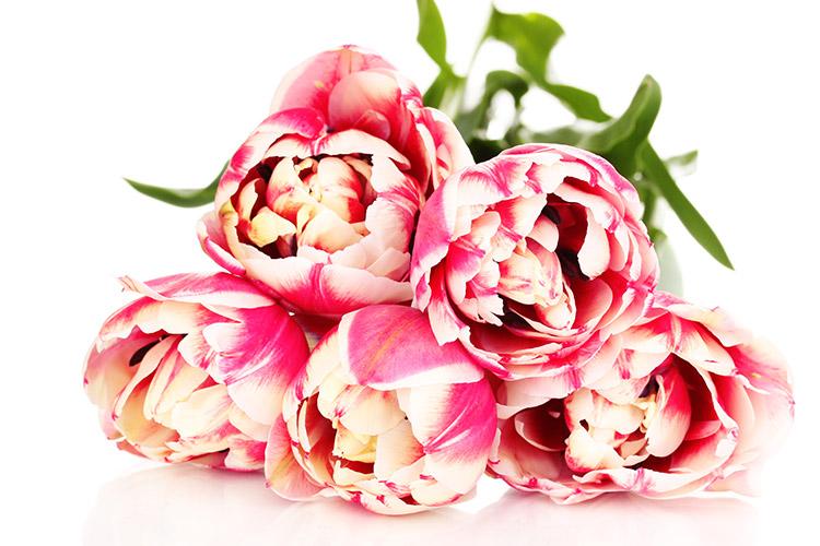 Livraison fleurs pas cher aujourd 39 hui for Fleurs a livrer a domicile pas cher
