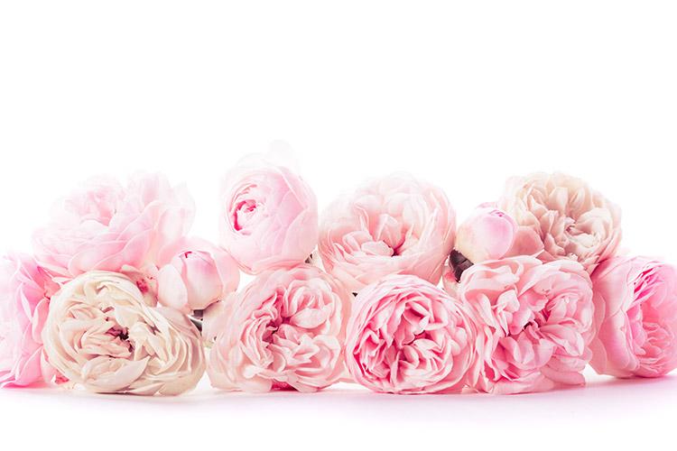 livraison pas ch re de fleurs en ligne closion. Black Bedroom Furniture Sets. Home Design Ideas