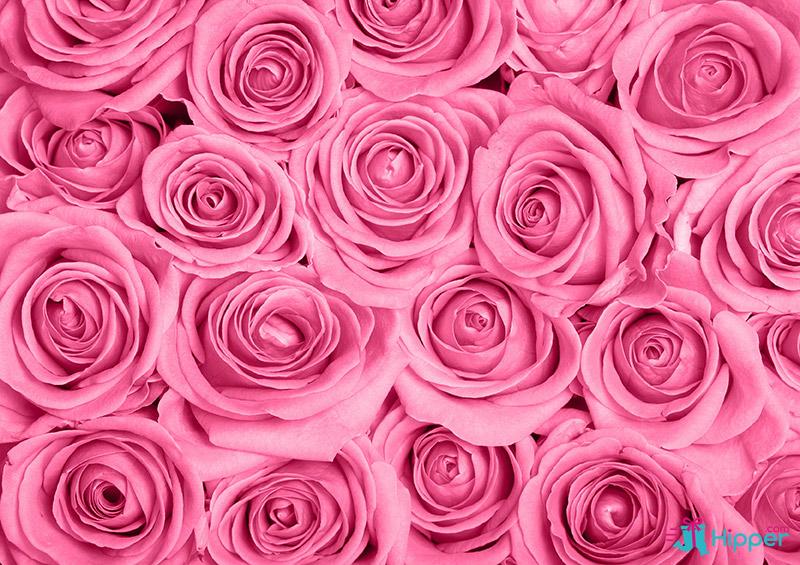 le code des roses signification de toutes les couleurs closion. Black Bedroom Furniture Sets. Home Design Ideas