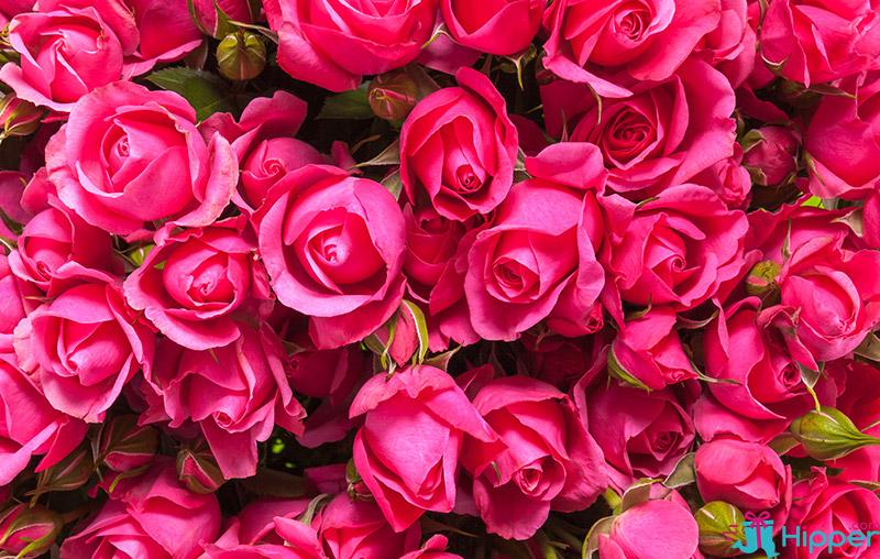 Les 10 Plus Belles Fleurs De L Amitie Eclosion
