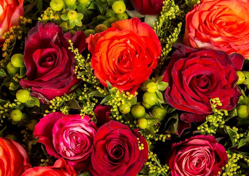 La Signification Du Nombre Des Roses Dans Un Bouquet éclosion