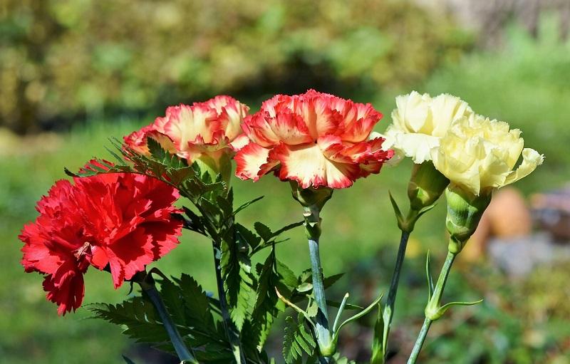 Bouquet De Fleurs Romantique Eclosion