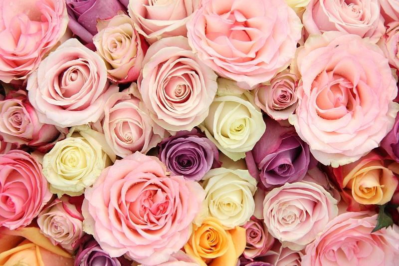 Combien De Roses Offrir Pour Un Anniversaire Eclosion