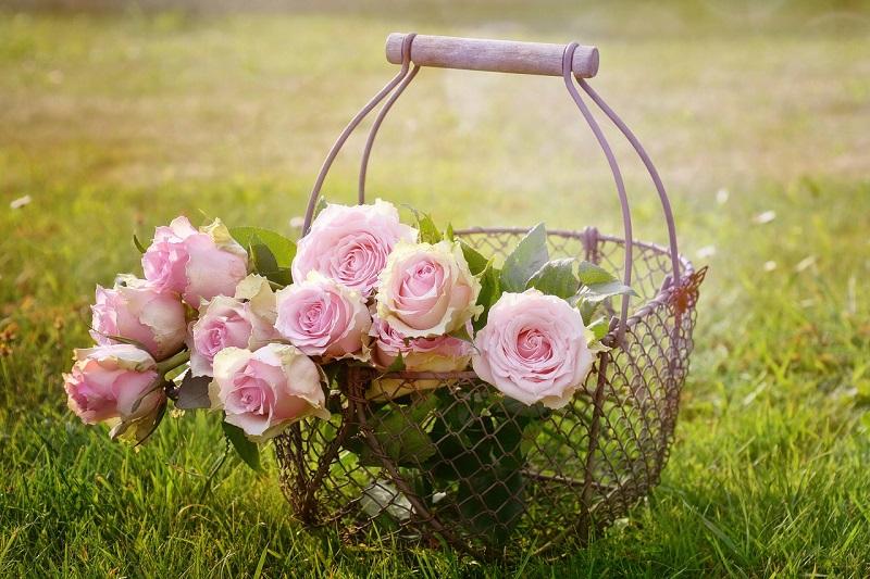 Belles roses sens