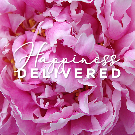 Serenata Flowers - Happiness Delivered